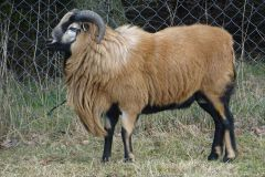 owce-10